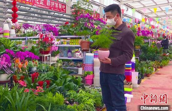 """万紫千红报春来""""新疆各地花卉市场复工开市"""