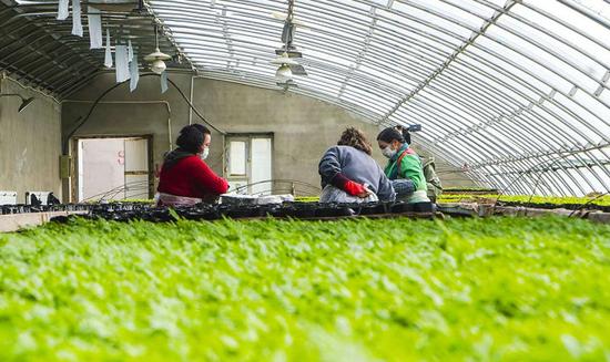 库尔勒苗圃春意盎然 4月预计育苗90万株