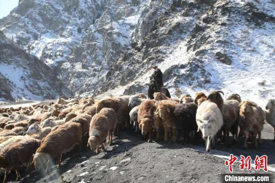 防疫、农牧生产两不误新疆兵团牧民开始春季转场