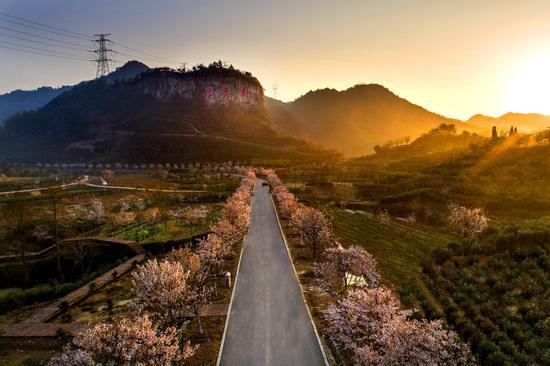 2020金华磐安樱花季活动即将举行