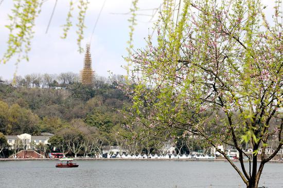 西湖宝石山前桃红柳绿。  柱子(通讯员) 摄