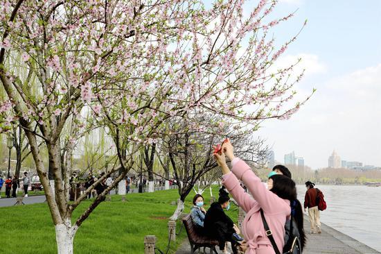 一位游客在拍摄西湖盛开的桃花。  柱子(通讯员) 摄