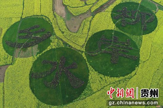 2020年3月18日,四川省毕节市黔西县洪水镇解放村油菜花田一角 史开心 摄