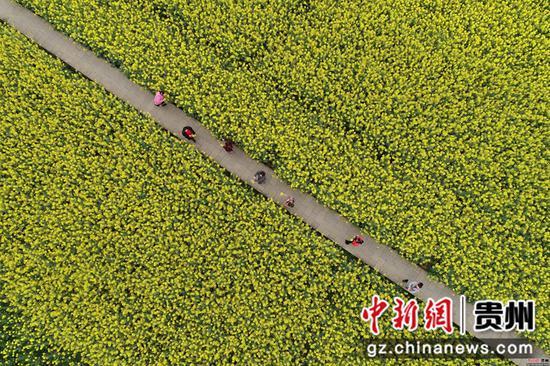 2020年3月18日,游客在四川省毕节市黔西县洪水镇解放村观赏油菜花  史开心 摄