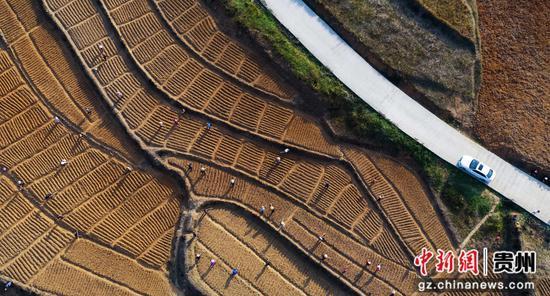 图为农民正在耕种