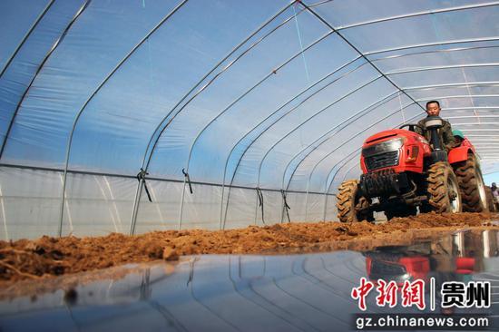威宁自治县草海镇中海社区用马铃薯播种机种植马铃薯 陈武帅 摄