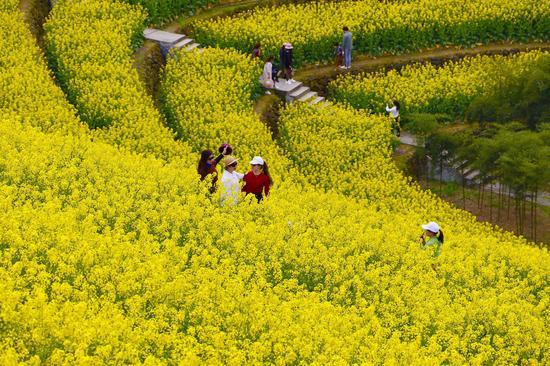 不少民众外出赏花、拍照。  钱晨菲 摄