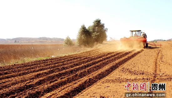 威宁自治县草海镇中海社区机器播种马铃薯 李岗 摄
