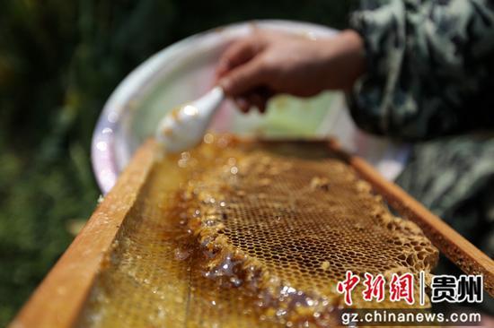 澳门葡京注册网址省毕节市黔西县雨朵镇登高社区科技副主任方平在花间采蜜。