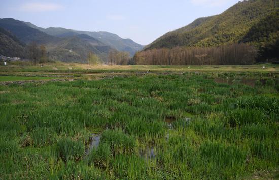 皎口水库复合生态湿地景色宜人。  王刚 摄