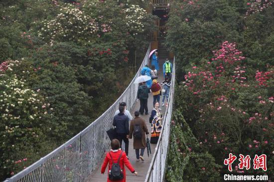 图为游客在百里杜鹃景区游览。 瞿宏伦 摄