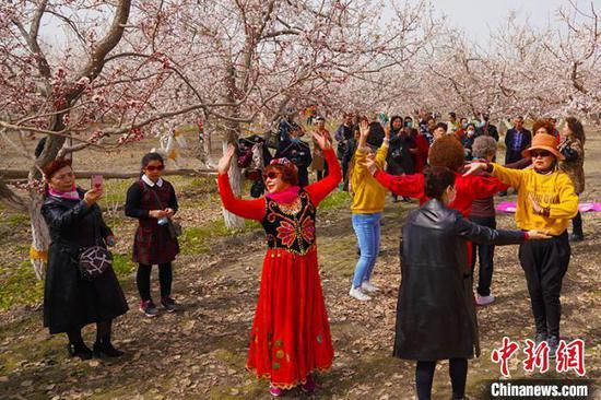 新疆南部輪臺縣6000畝杏花次第盛開引客來