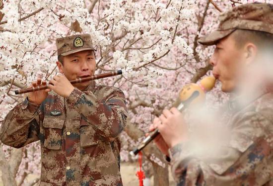 周末假日 新疆军营赏杏花别有一番滋味