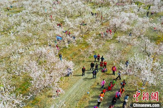 库尔勒游客在轮台县野云沟乡杏园欣赏杏花盛开美景。 薛兵 摄