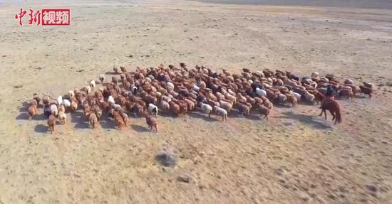 """新疆阿勒泰多举措助牧民百万牲畜""""大迁徙"""""""