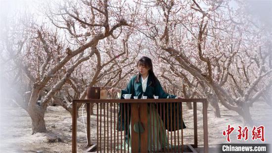 春色满目 新疆兵团团场万亩杏花竞相开放