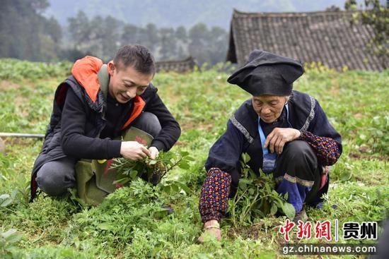 貴州民大派駐鎮遠縣報京鄉貴灑村第一書記郭油志幫助貧困戶鋤草。