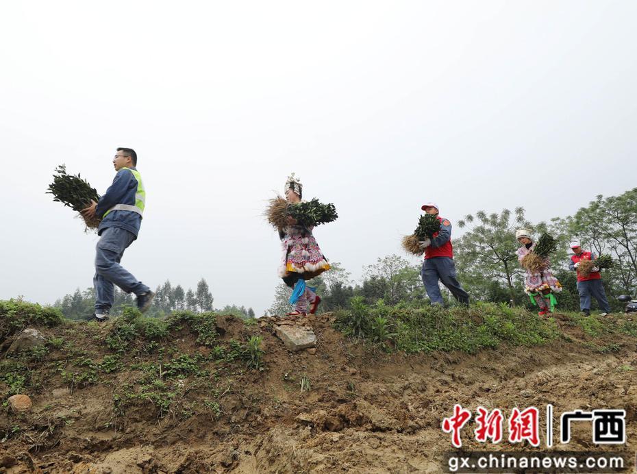 广西融安志愿者抓备耕助脱贫