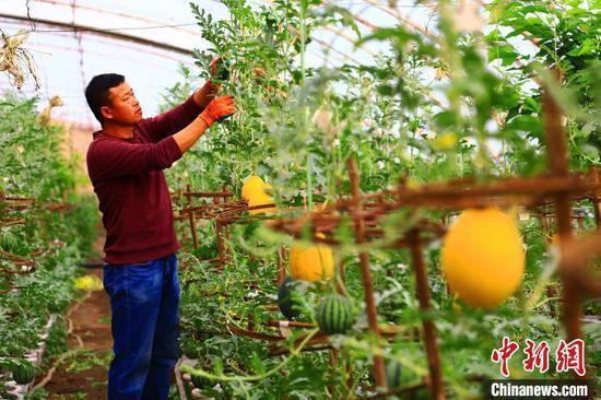 """新疆吐魯番地區托克遜縣""""牛奶西瓜""""種植助農脫貧"""