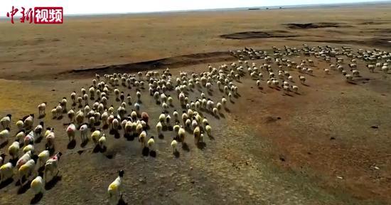 新疆:高原牧民因雪灾致贫 因旅游新兴牧业致富