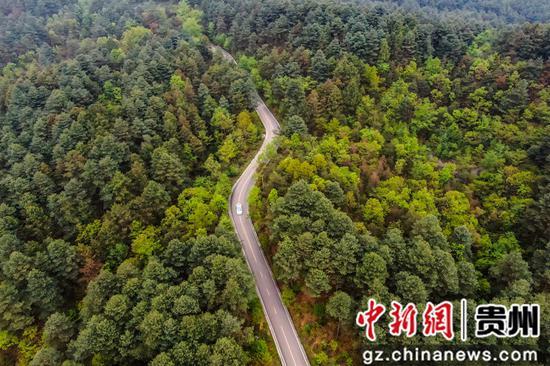 游客驱车行驶在拱拢坪国家森林公园内的公路上   陈曦摄