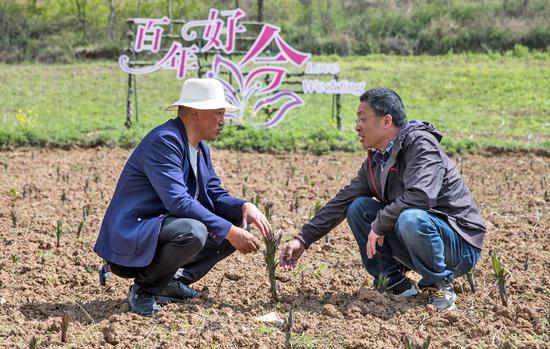 台州市政协委员、玉环市农业专家池方河到上关村百合产业园开展技术指导沈思维 摄