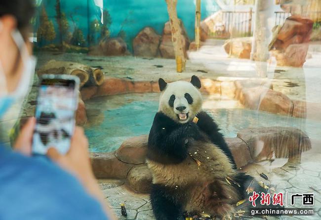 南寧市動物園恢復開放 每日限5000人入場