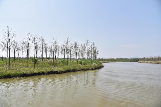 探訪浙江玉環漩門灣國家濕地公園 春景美如