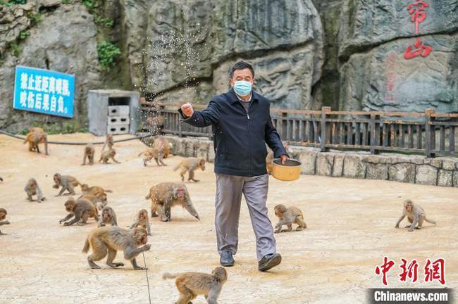 """广西壮乡""""猴王"""":将猴山变""""金山"""""""