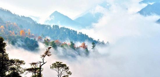 慶元自然風光。慶元文化旅游體育局供圖