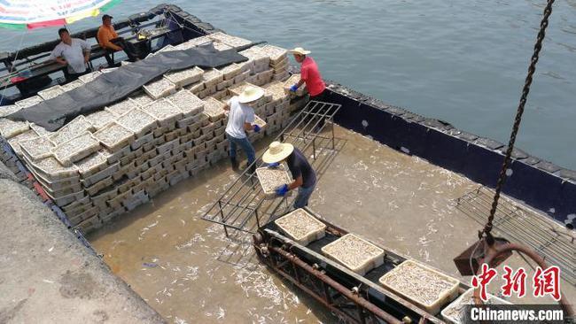 南海进入伏季休渔期 广西北海数千艘渔船回港休渔