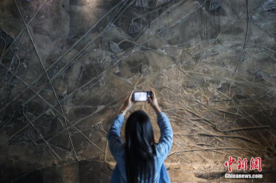 游客拍摄展出的海百合化石。中新社记者 瞿宏伦 摄