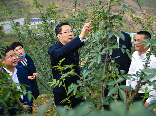 孙志刚在望谟县甘莱村花椒种植基地考察。  杜朋城 摄