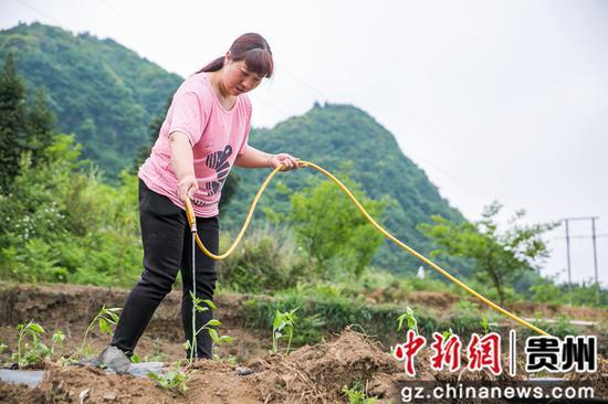 5月12日,在澳门金沙网上平台省毕节市大方县慕俄格古城街道凉井村,村民正在为辣椒苗浇水。 罗大富 摄
