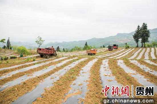 5月12日,在澳门金沙网上平台省毕节市大方县慕俄格古城街道凉井村,送水车队在机耕道上行进。 罗大富 摄