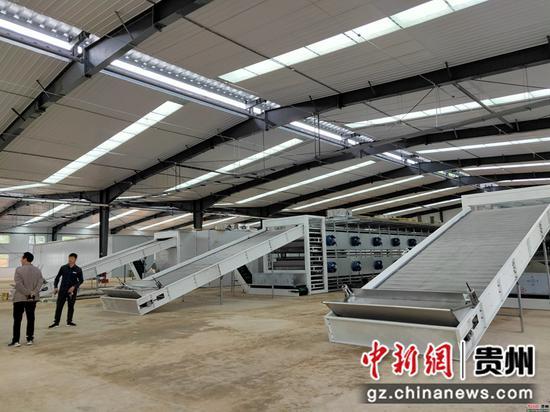 中药材交易市场加工区的生产线搭建完毕