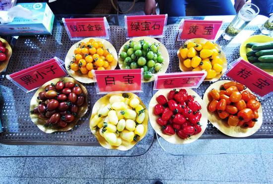 彩色番茄。 浙江省农业厅 供图