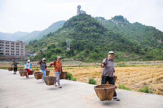 几名村民正挑着扁担去接麦。 王敏智 摄