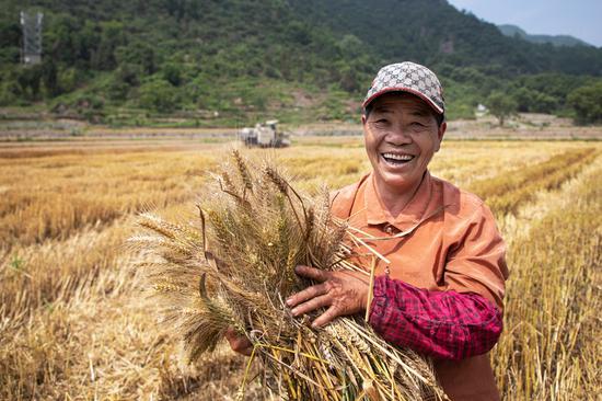 农民迎来小麦丰收,露出灿烂的笑容。 王敏智 摄