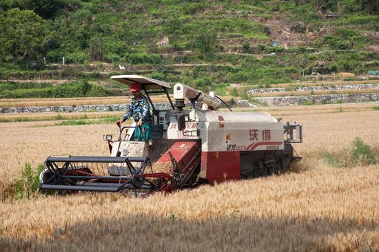 农民操作收割机进行作业。 王敏智 摄