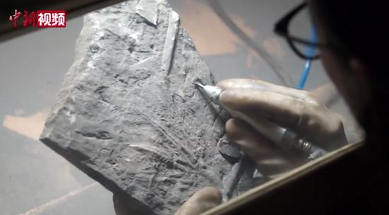 贵州化石修复师二十年钻研化石原生修复与保护
