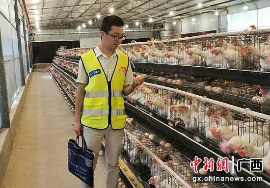 图为杨俊兴查看勇灵蛋鸡场情况。李干金摄