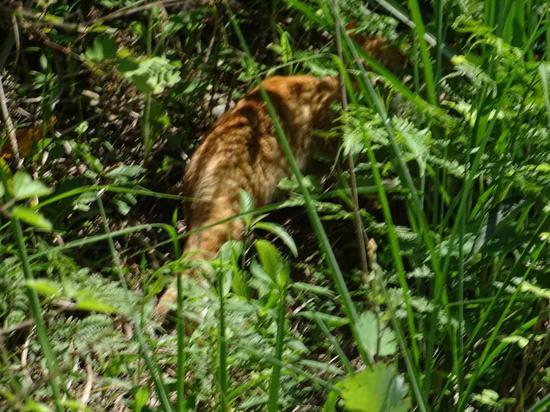 豹猫影像。  仙居发布供图