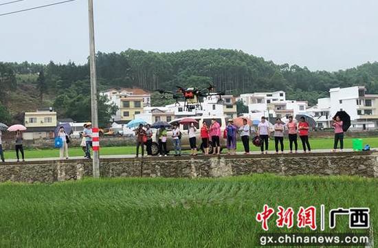 柳州市鱼峰区农技培训进村 无人机施药助农脱贫致富