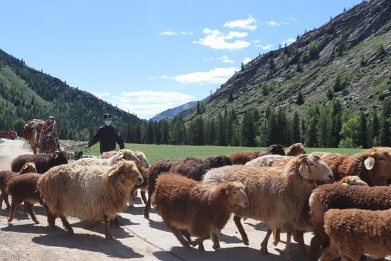 阿勒泰边境管理支队吐尔洪边境派出所民警帮助哈萨克族牧民赶羊转场。