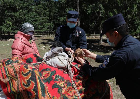 阿勒泰边境管理支队吐尔洪边境派出所民警帮助牧民在骆驼身上包裹出生羊羔。