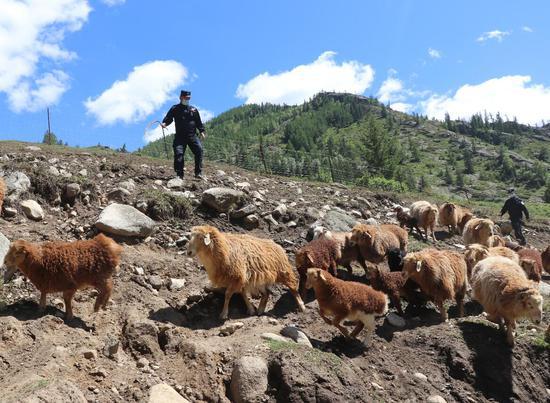 新疆移民管理民警护航哈萨克族牧民夏季转场