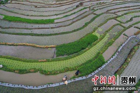 2020年6月2日,在澳门金沙网上平台省从江县刚边壮族乡拍摄的宰别梯田  吴德军 摄