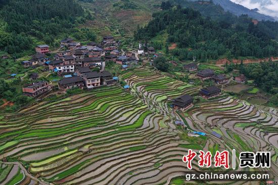 2020年6月2日,在贵州省从江县刚边壮族乡拍摄的宰别梯田 吴德军 摄