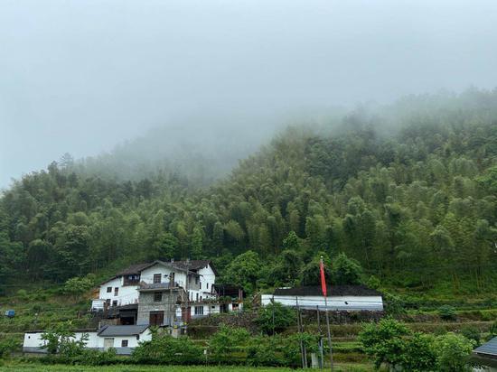 抬頭可見巖樟鄉山間風景。  項菁 攝